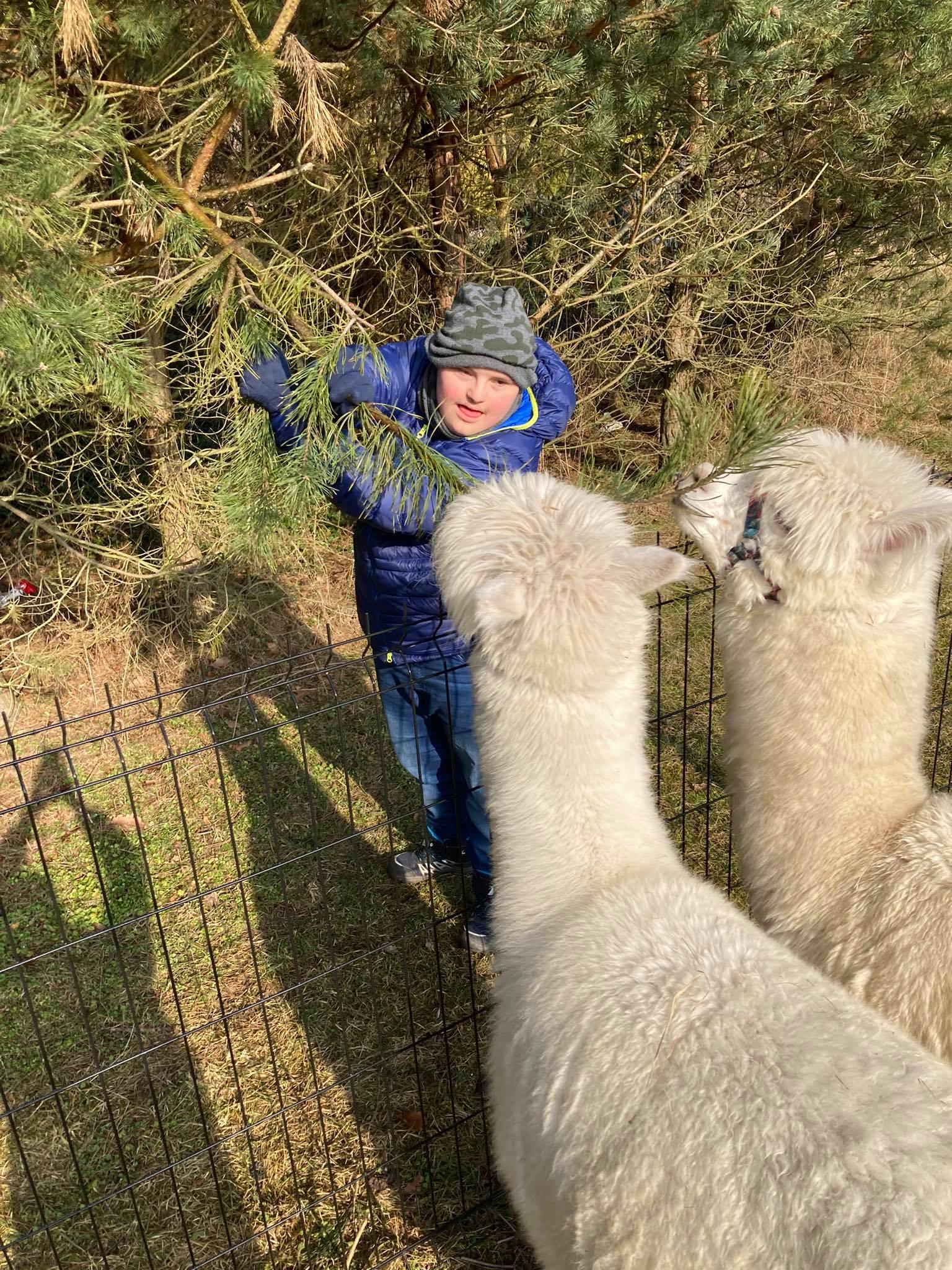 Powitanie ucznia z alpakami