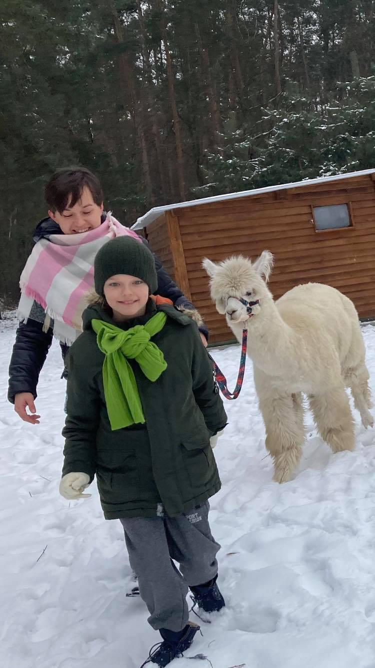 Alpaki wyprowadzane na spacer na smyczy zimą